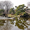 皇居東御苑二の丸庭園 CHAC0I7946