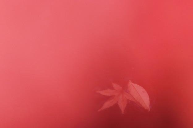Photos: 落ち葉
