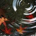 Photos: 落葉の景色