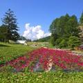 写真: 夏山