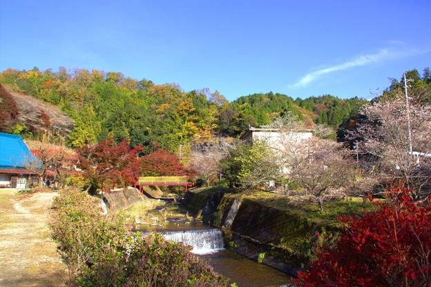小原四季桜まつり