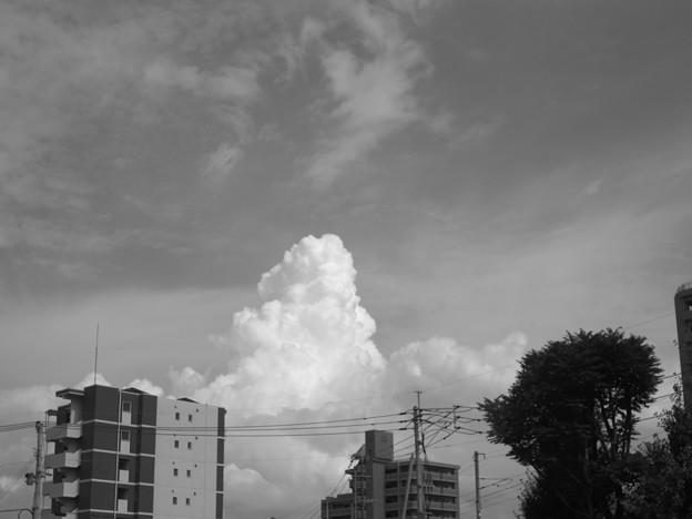 Photos: ナツグモ