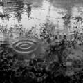 Photos: 雨降り