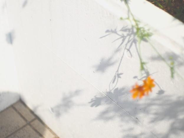 Photos: 風とユレル