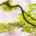 写真: 新緑の香り