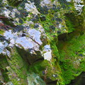 Photos: 苔岩