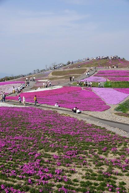 芝桜の丘3