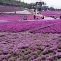 芝桜の丘5