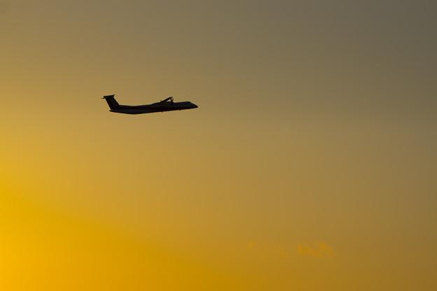 写真: 夕焼けに飛ぶ