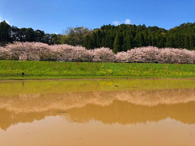 写真: 新田野の水鏡
