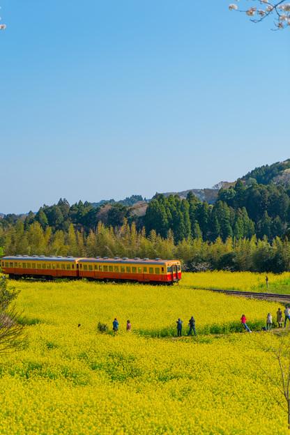 Photos: 菜の花と列車を撮る人々