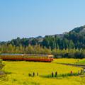 写真: 菜の花と列車を撮る人々