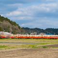 Photos: 桜列車
