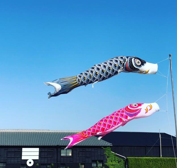 鯉のぼり@インスタ風