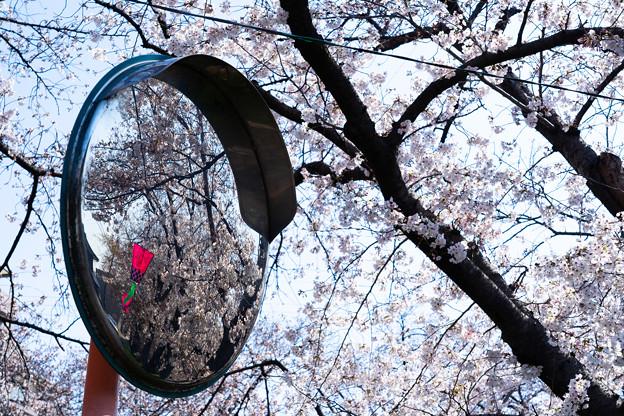 Photos: 花見ミラー