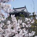 Photos: 岡崎の春