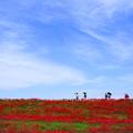 Photos: 彼岸花を見ながら