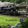 Photos: 段駅アジサイB