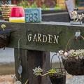 Photos: これが私の庭
