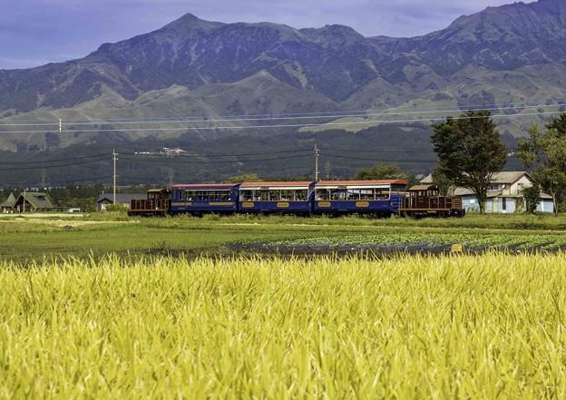 南阿蘇の秋「トロッコ列車」