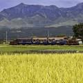 Photos: 南阿蘇の秋「トロッコ列車」