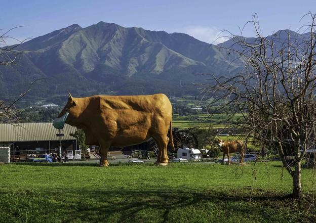 肥後の赤牛もコロナ対策