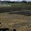 Photos: 収穫を終えて