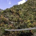 梅の木轟吊り橋