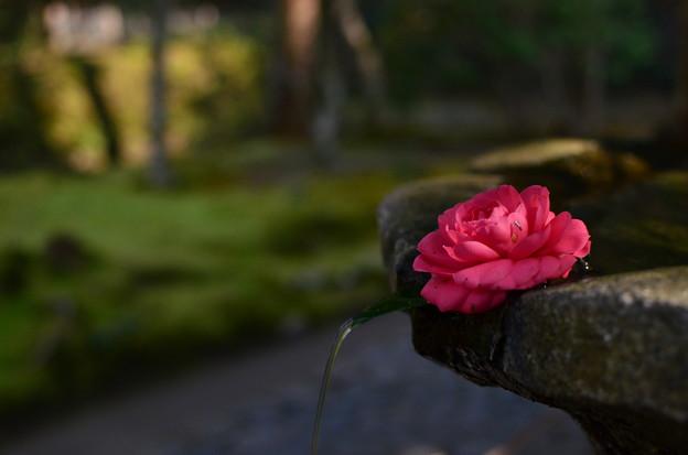 京都を散策