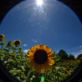 Photos: 夏が恋しい季節