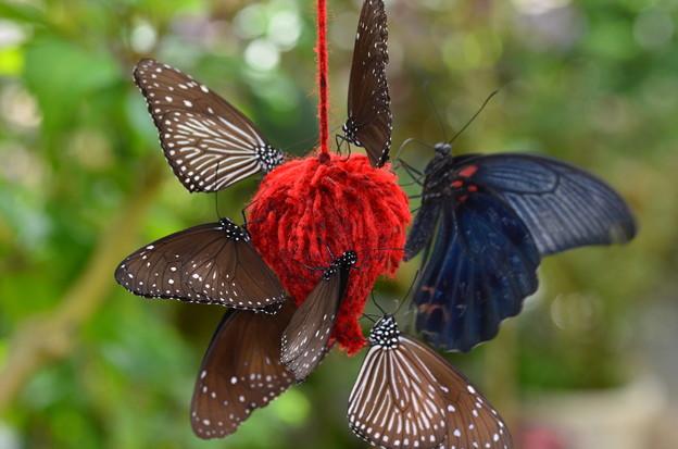 蝶々のレストラン