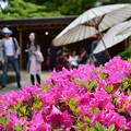 Photos: 春のぼたん祭