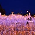 Photos: 煌めく草原