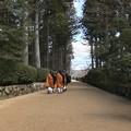 Photos: 伽藍廻り