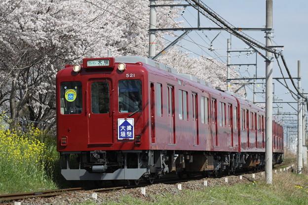 写真: 養老鉄道×桜2018年(大垣揖斐復刻板)