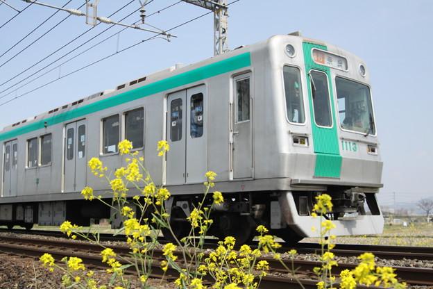 京都市交通局10系×菜の花