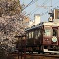 阪急7000系(直通特急あたご)×桜2018年