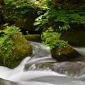 奥入瀬渓流