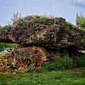 Photos: blance stone
