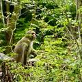 写真: お猿さん
