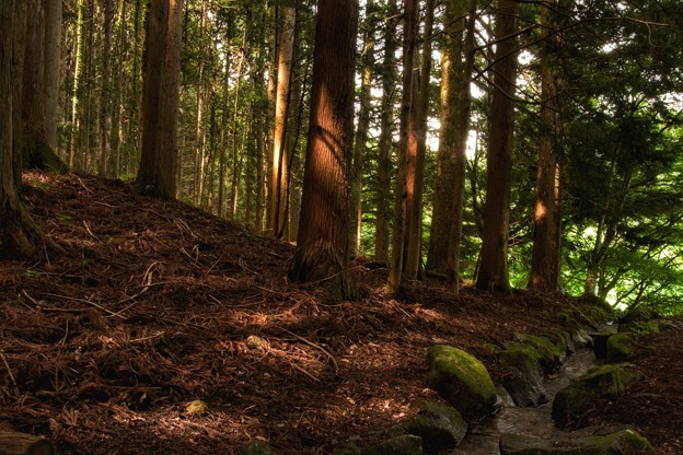 南伊奈ヶ湖周辺の森