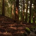 写真: 南伊奈ヶ湖周辺の森