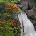Photos: 花と滝と新緑と