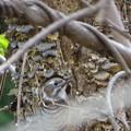 写真: 巣穴