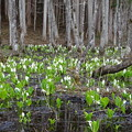 写真: 仁田沼の春