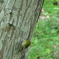 Photos: 巣材の蜘蛛の糸を・・・