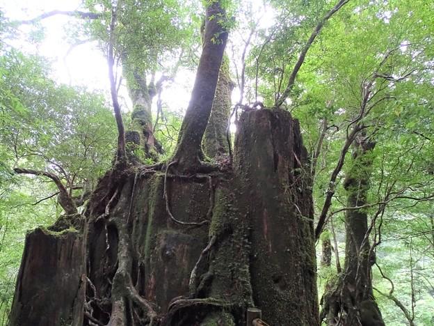 再生の森…