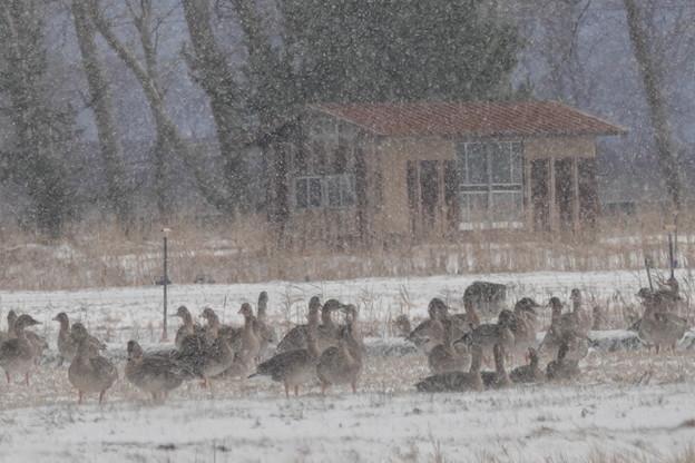 吹雪 ふぶき フブキ・・・