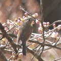 Photos: 桜の木の下で・・・