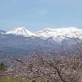 Photos: 桃の花の咲く頃